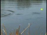 Интересная уловистая оснаска состоящая из петли и з-х тройников для ловли щуки на живца (Антон Сасстегаев)...