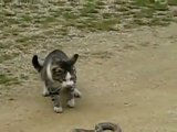 Бедный глупый коте=(((жалько